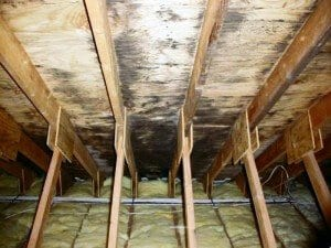 Final-Cut-Roofing-Black-Mold-300x225
